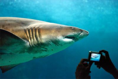 Праздное фотографирование акула фотографирование праздные туристы