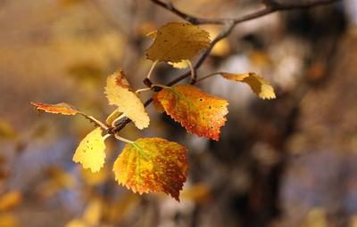 осенние акварели Лапландия осень бал-маскарад