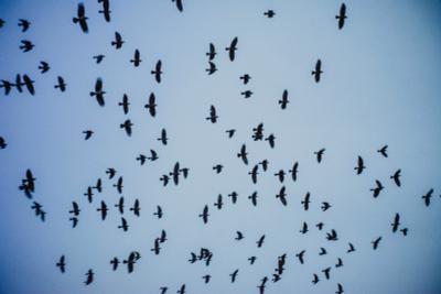 Птицы птицы небо