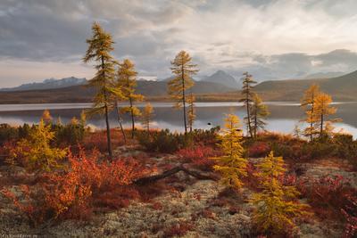 """""""Осенние краски Колымы"""" Колыма Дальний Восток Магаданская область озеро Джека Лондона краски осени осень"""