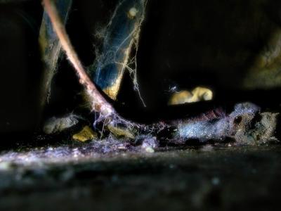 под ванной ржавчина, паутина, плесень