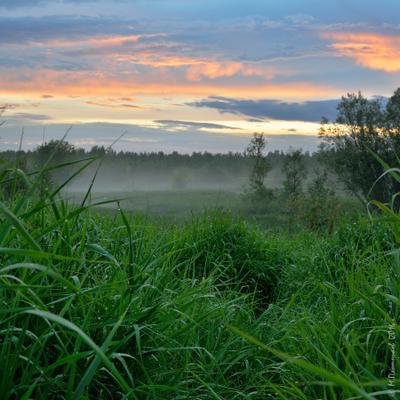 После дождя Пермский край Соликамский р-он Верхнее Мошево Мошевица вечер после дождя заката июнь белые ночи