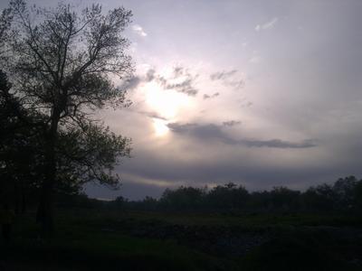 *** небо дерево облака природа