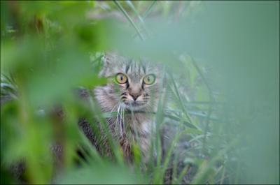 В засаде ) кошки лето