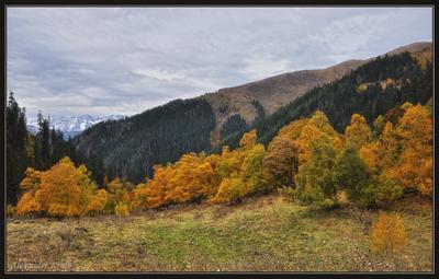 Хмурилось небо, желтели берёзы... осень, горы