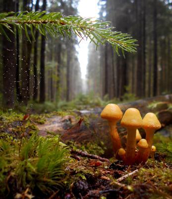 пасмурное утро лес лето утро дождь грибы