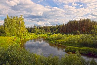 Июнь на Медведице лето глубинка река лес вечер вода