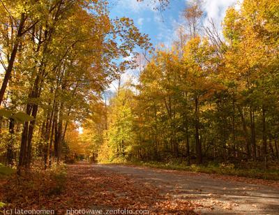 Autumn at the Balsam Lake парк, лес, Онтарио, Канада, Balsam Lake, Ontario, Canada, lateonomen