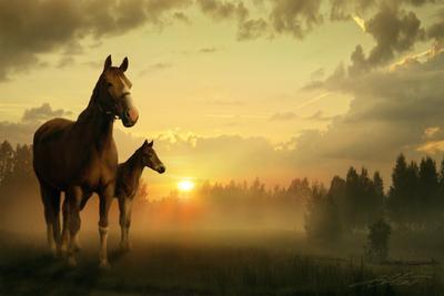 Meadows of Heaven Digital Photo Art Horses Nightwish Eltons Fantasies