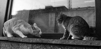 Обострение Коты Кот Животные Драка