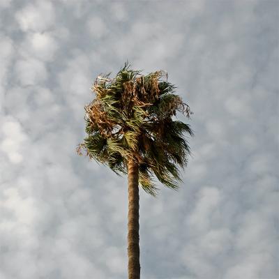 ... пальма