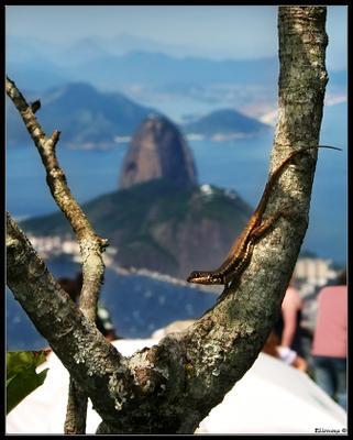 На мир посмотреть Brazil Rio De Janeiro Sugar Loaf Pao de Acucar lizard Бразилия Рио де Жанейро Сахарная голова ящерица