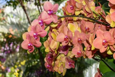 Орхидеи Орхидеи