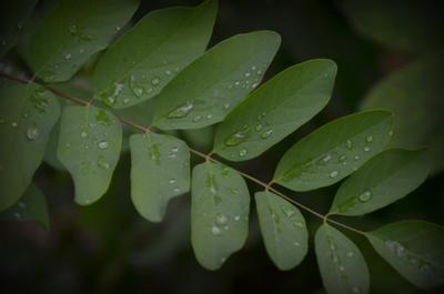 После дождя листья капли природа