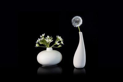 Одуванчик и полевые цветы
