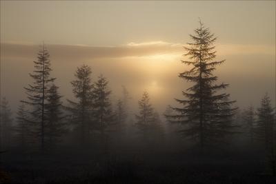 Среди туманов Утро, Сахалин, осень