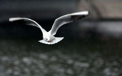 Высота 15 метров, полет нормальный... птицы