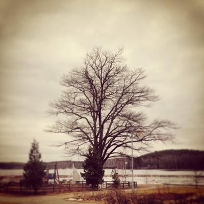 Одиночество Природа