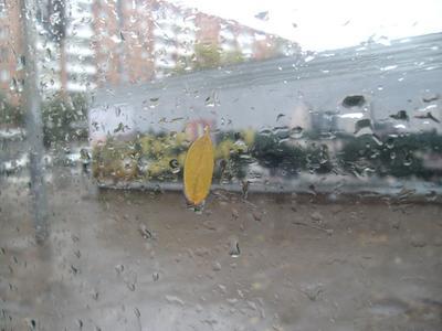 Лист на стекле Ростов-на-Дону осень лист дождь
