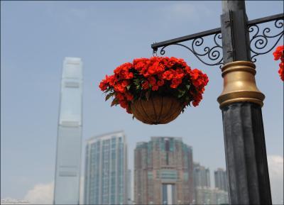 Цветы и башни - 2