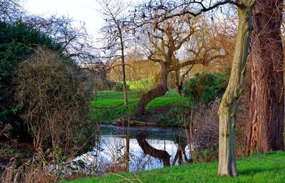 Конец декабря Лондон Риджентс-парк пруд дерево отражение 29.12.2015