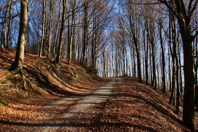 Лесная дорожка лес осень деревья дорога