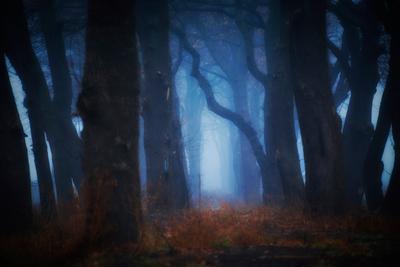 Тёмный лес Краснодар Кубань Россия природа город