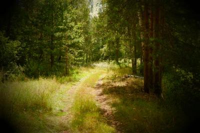 Лесная дорога Природа