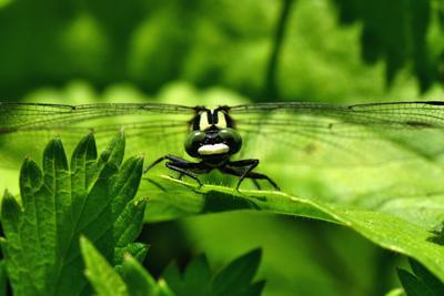 зелёные глаза природа