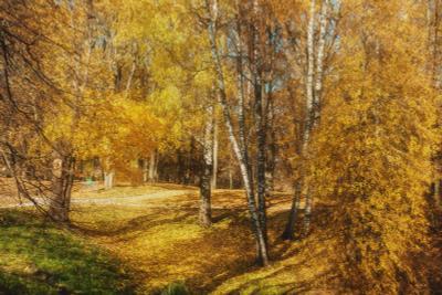 Тригорское. Осенний парк. Пушкинские горы. Октябрь. Тригорское Осенний парк Пушкинские горы Октябрь