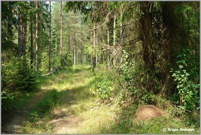 Дорога в Хатынском лесу