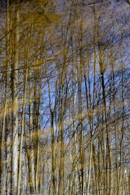 """""""Отражение в воде. Весенний лес"""". весна лес природа Мордовии деревья отражение"""