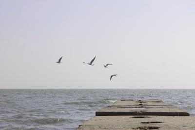 4 чайки море азовское полет
