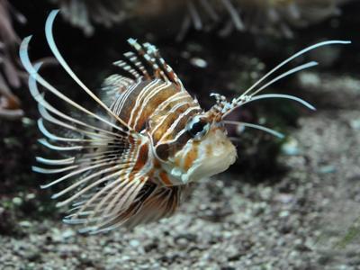хлопай ресницами океанографический музей монако