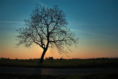 _Y__ Утро Рассвет Дерево