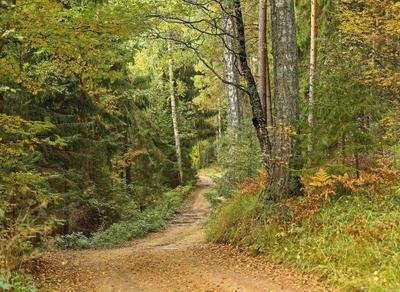 *** вспоминая осень в смешанном лесу...