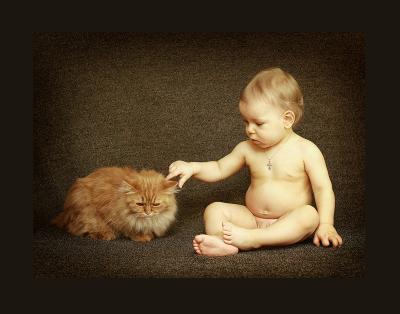 котенки кот, малыш, рыжий