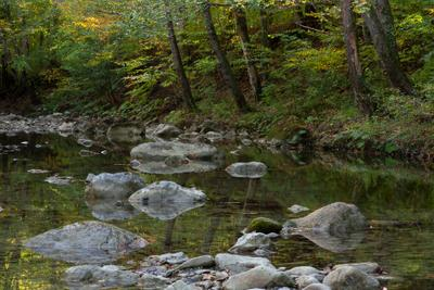 река Чепси природа река осень