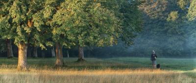 Утренний моцион с собакой прогулка утро лес человек