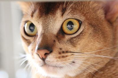 cat мой кот, взгляд кота, глаза кота