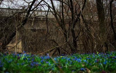 Весна цветы подснежник путешествие заповедник природа