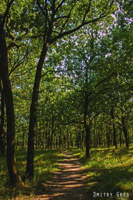 411 батарея природа деревья зелень трава одесса украина воздух лето солнце отдых canon парк park фотошоп photoshop
