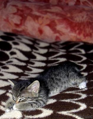Спит, усталый))) котенок спит наигравшись и наевшись