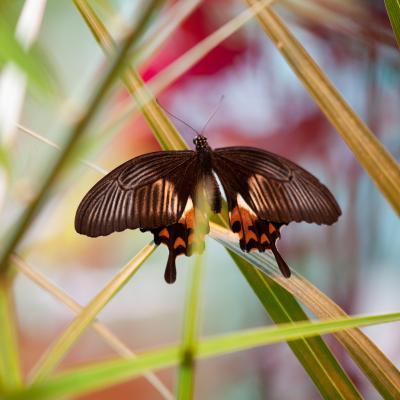 *** бабочка