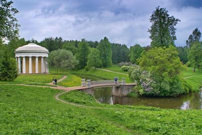 грибной дождик Павловский парк