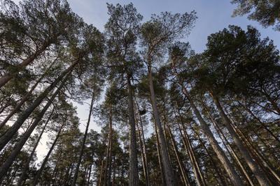 *** лес небо воздух