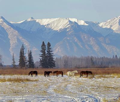 Январь в Бурятии лошадь Бурятия Тункинская долина