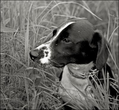 Из племени сиу индейцы собака трава