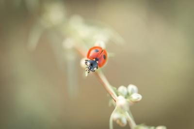 Природный минимализм божья коровка красный природа насекомые жуки макро фауна живой мир красота рядом микромир