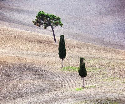 ***Лес в Тоскане... ) пейзаж Тоскана Италия деревья